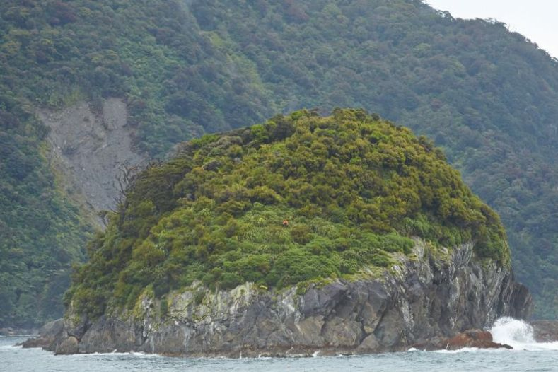 A round island made of rock with trees on the top sits in the sea in front of a bush-clad cliff face in the background