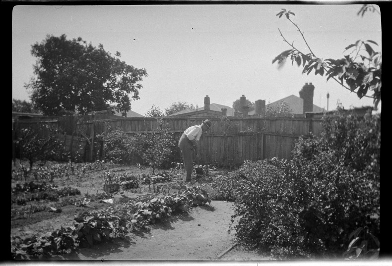 Black and white photo of a man in a backyard vegetable garden