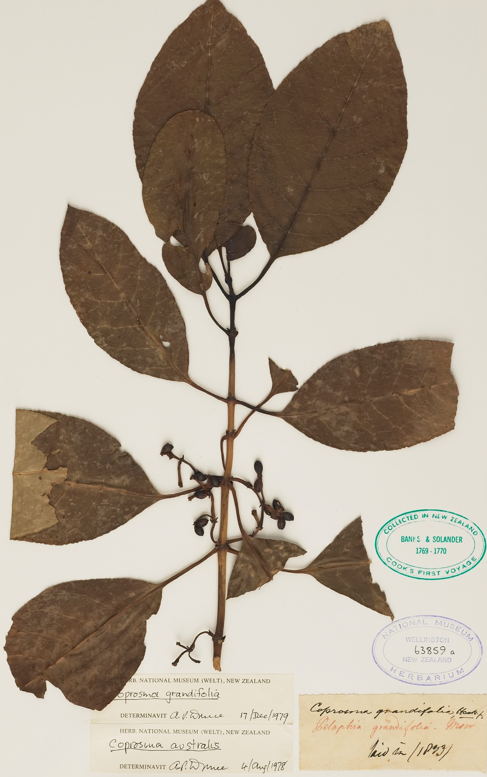 Brown leaves on a twig branch pressed on cream card with official notes and stamps