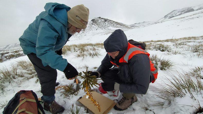 Antony Kusabs and David Lyttle pressing plants in the snow near End Peak. Jan 2021, Photo by Heidi Meudt @ Te Papa.