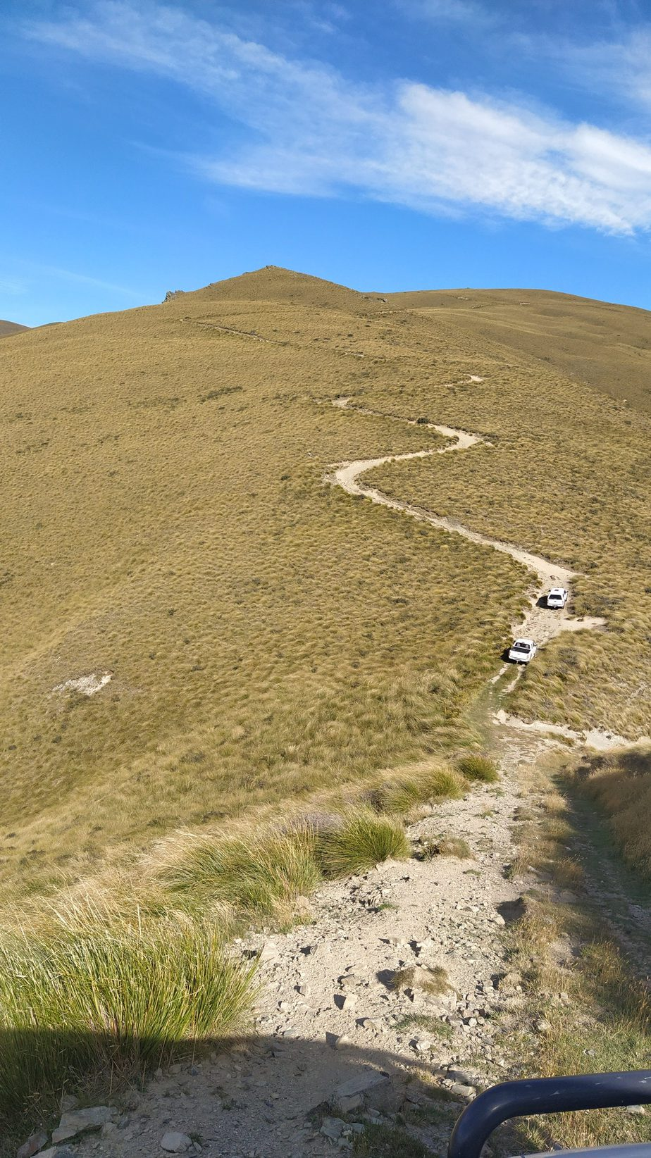 Following the 4WD track in the Dunstan Mountains, Jan 2021. Photo by Heidi Meudt @ Te Papa.