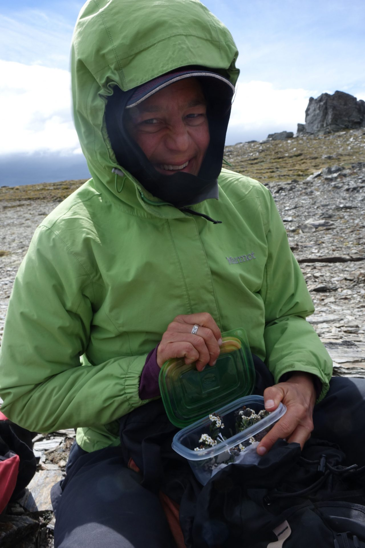 Heidi Meudt collecting a specimen of Myosotis oreophila SP111278, Dunstan Mountains, Jan 2021. Photo by John Barkla.