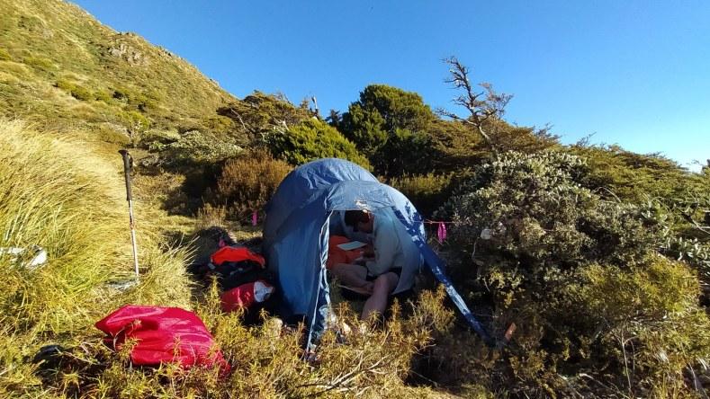 Ant Kusabs pressing plants at our campsite on Hikurangi, Dec 2020. Photo by Heidi Meudt @ Te Papa.