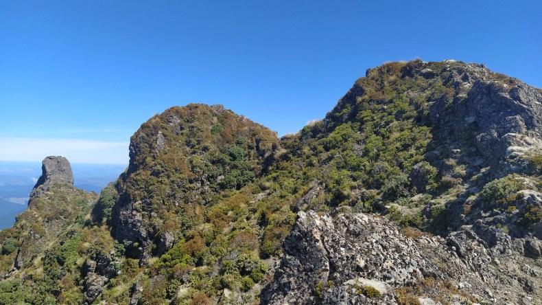 View south as we walked along the main ridge of the southern Hikurangi range, Dec 2020. Photo by Heidi Meudt @ Te Papa.