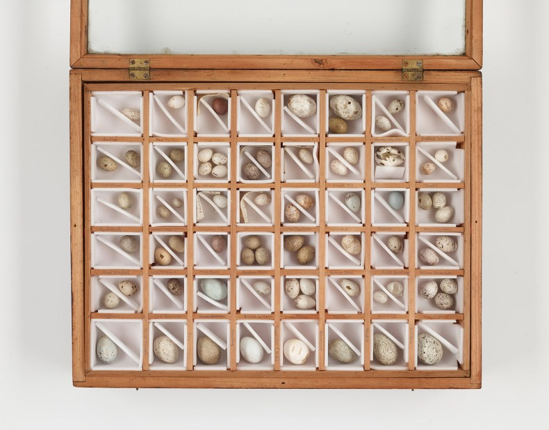 A wooden tray with 48 boxed sections in it, with one, two, or three small eggs in each box.