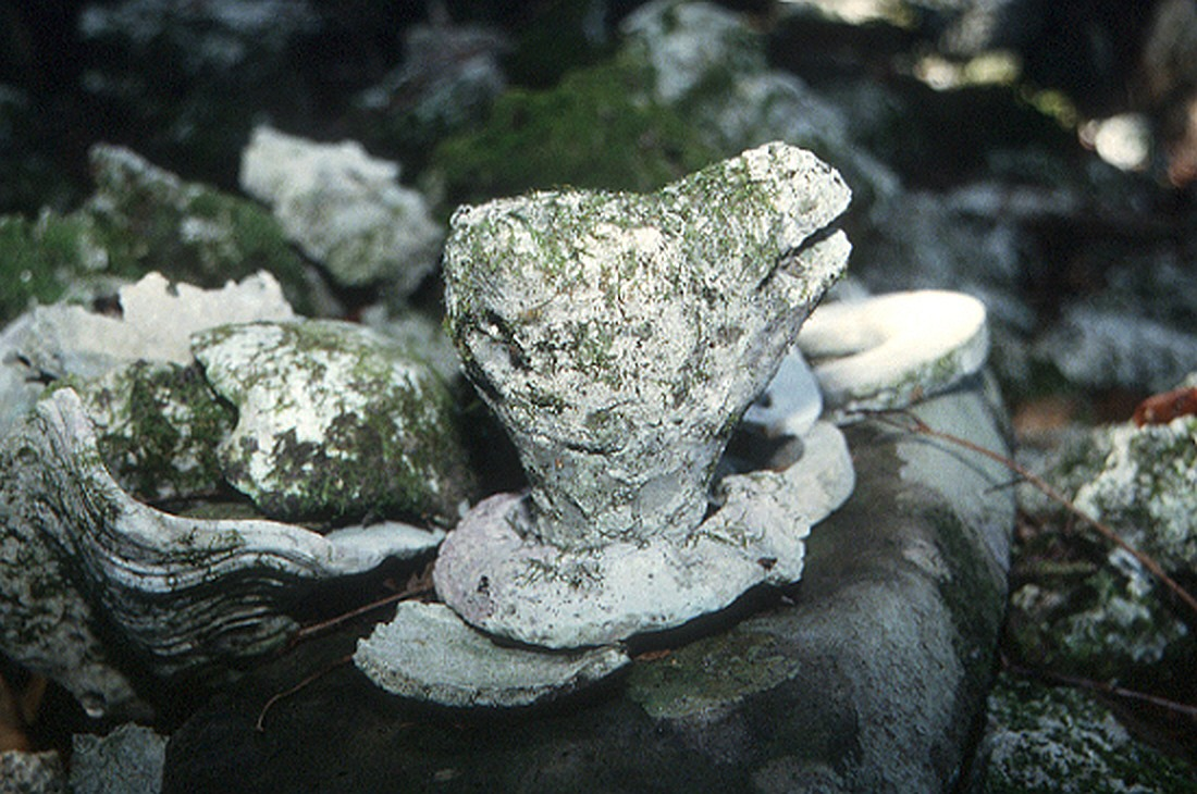 A stone head of a dog rests on a stone
