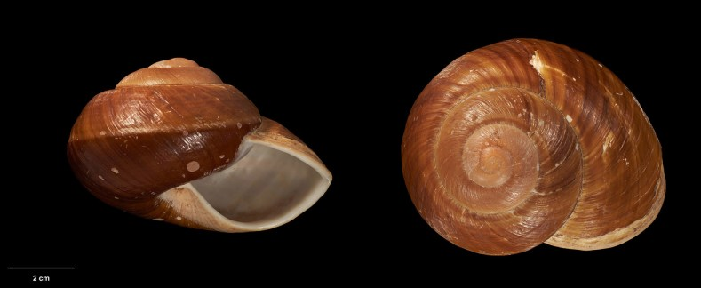 Two angles of the same shell on a black background