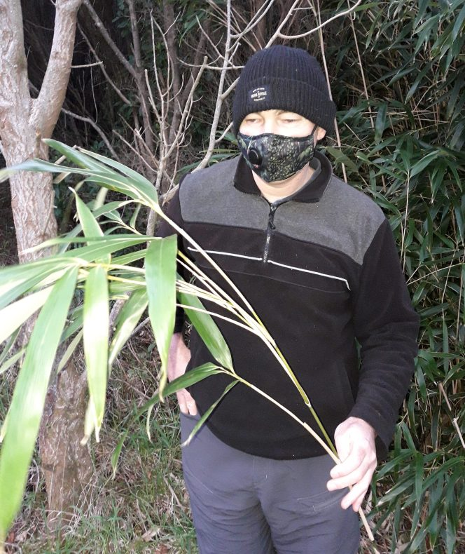 A man wearing a black and white face mask and a black beanie holding a leafy bamboo stalk