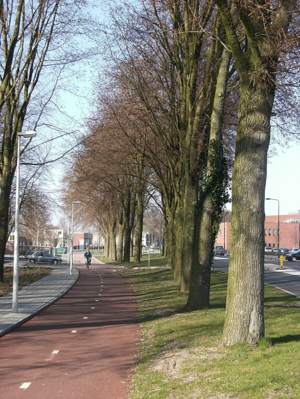 A tree-lined cycle path with a cyclist in the far distance.
